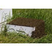 Honey bee colony