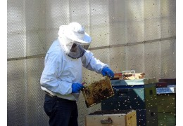 Urban Beekeeping And Benefits