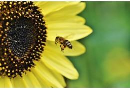 What are Pollination and the benefits of it?