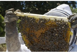 How To Check If You Have A Strong Hive