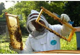 Why are Your Bees Not Using their Super?