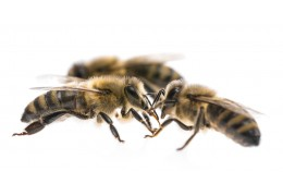 Six fascinating ways honeybees communicate