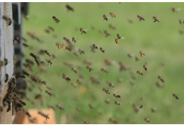 Γιατί είναι τα μέλι σημαντικά για το περιβάλλον