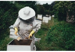 What is Beekeeping and how to plan for it?