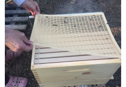 How Long Does It Take To Get Honey From A New Hive?