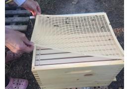 Hoe lang duurt het voordat honing uit een nieuwe bijenkorf komt?