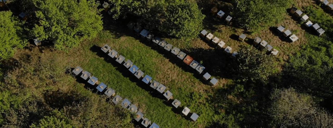 Granja de abejas